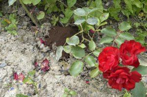 marc de café et jardinage